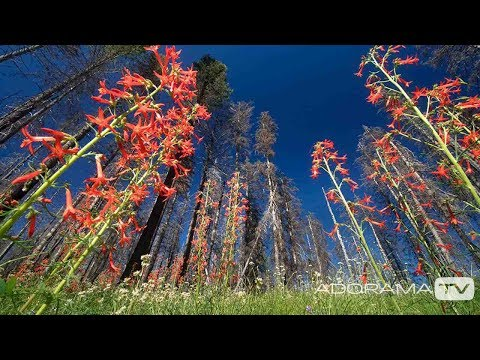 Using your Super Wide Angle Lens: You Keep Shooting with Bryan Peterson