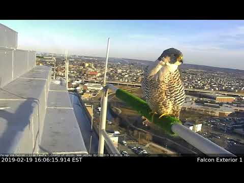 New Female Falcon Takes Over at Union County Courthouse