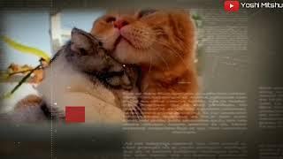Download TAK KAN PISAH ( story WA keren dr EREN ) bikin bapeeerr..