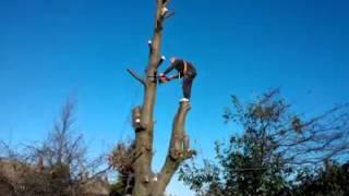 fail, tree cutting