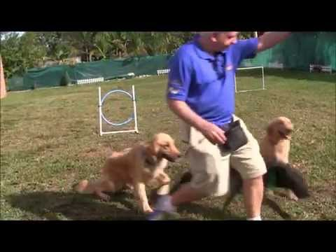 Dog Training: Hand signals in Obedience Training