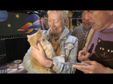 Supreme Cat Show with Gyles Brandreth - The One Show
