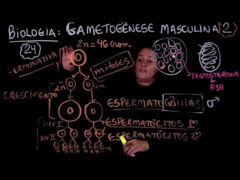 Enem: Aula 24 GAMETOGENESE MASCULINA parte 2 (ProUni)