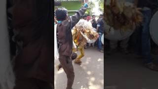 sher baja dance