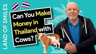 Can You Make Money in Thailand with Cows?