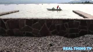 Lake Cajititlan: Fish die off in large numbers. Fishermen have been...
