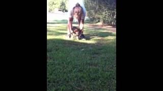 German Shepherd Puppy Play Time