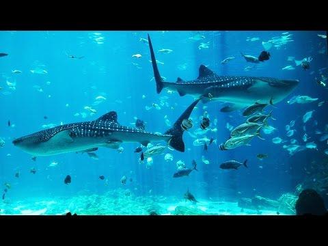 The Georgia Aquarium!!