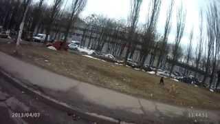 Злые Киевские собаки