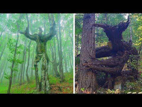 Необычные деревья, которые напоминают нам нечто совсем другое