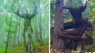 видео Самые необычные деревья мира