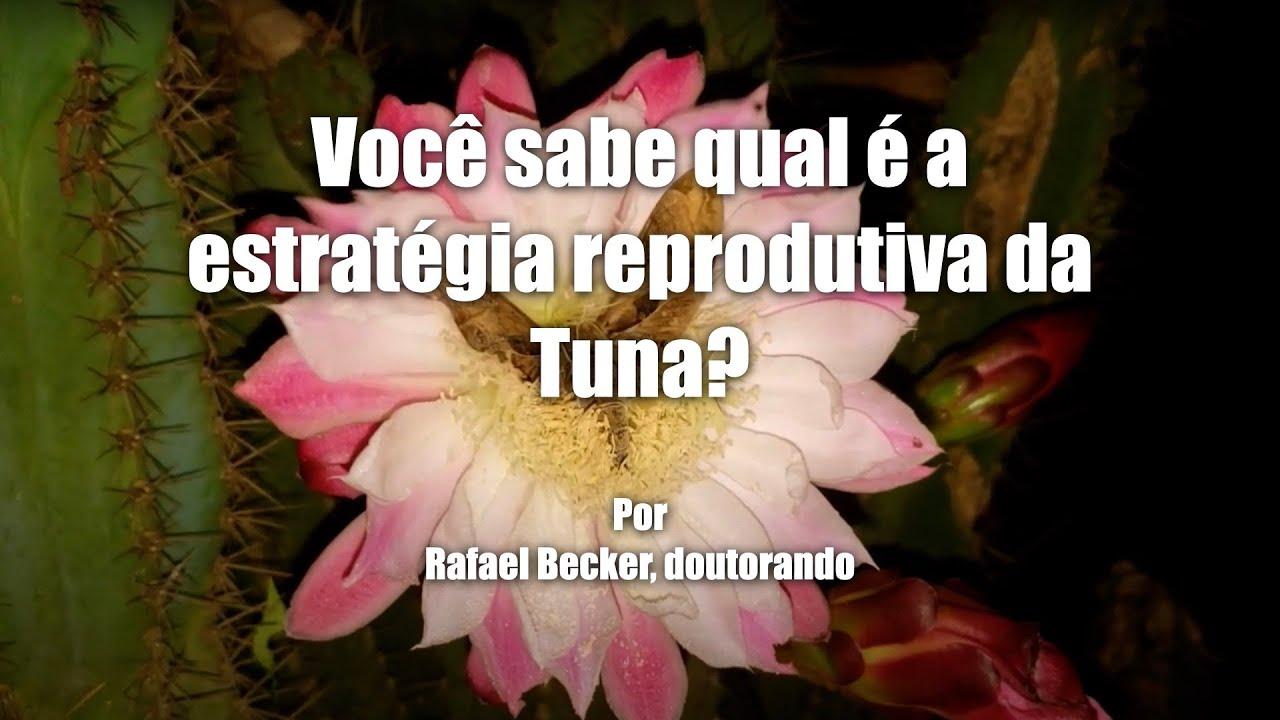 Você sabe qual é a estratégia reprodutiva da Tuna?