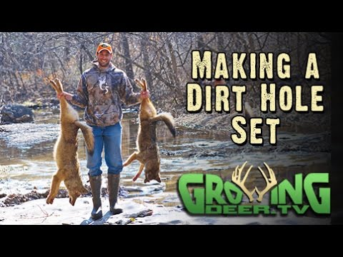 How To Make A Dirt Hole Set Trapping Coyotes 272 At Growingdeertv