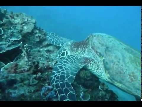 Samoa - Dive Savaii