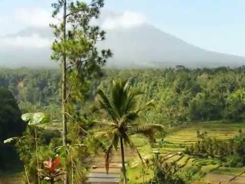 Best rice fields views in Bali