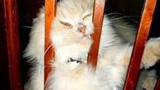 Самые Смешные Кошки 2015! Самое Прикольное Видео Про Кошек! Funny Cats 2015