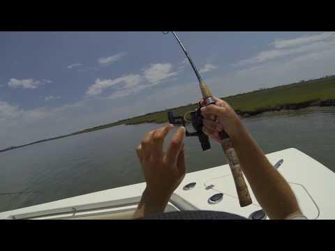 July 2nd 2017 Wachapreague, Virginia Flounder Fishing