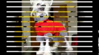недорогой магазин одежды для собак