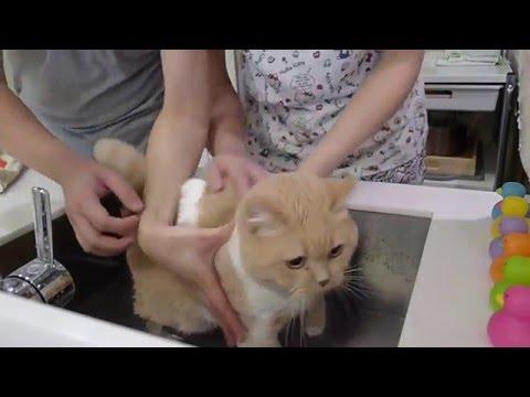 貓貓沖涼記