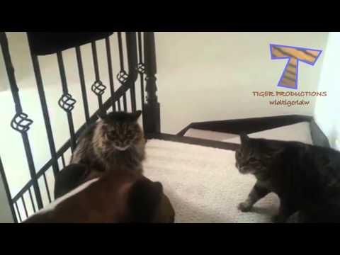 Hunde Katzen Erschreckt  Lustige Tierzusammenstellung
