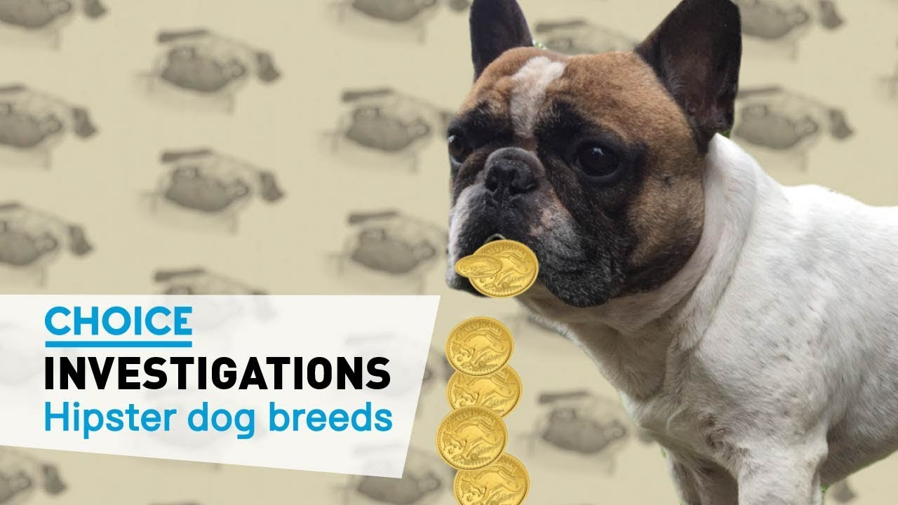 High vet bills for dog breeds like French and British