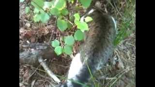 Кот ловит мышь в лесу