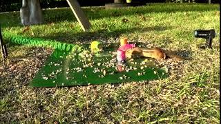 Катапульта для бурундука. Смешные короткие видео про животных и хозяев