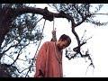 L'albero di Giuda ..