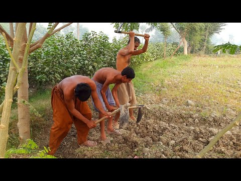 Daily Work Routine In Punjab | Pakistan Village Life