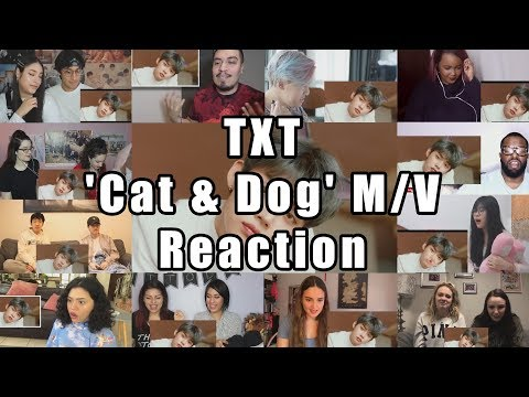 "txt-(투모로우바이투게더)-'cat-&-dog'-official-mv-""reaction-mashup"""