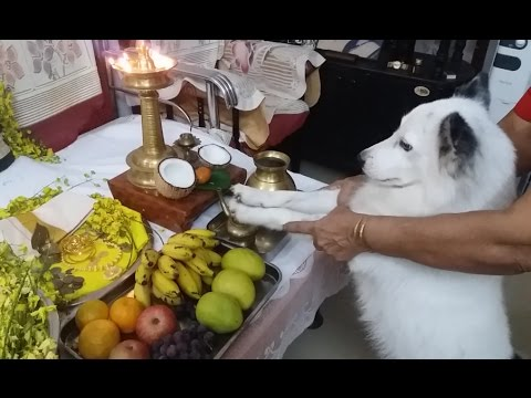 TRIP TO PALAKKAD without PUPPY. KERALA- GOD'S OWN COUNTRY, INDIA. VISHU-New Year of KERALA. 1st VLOG