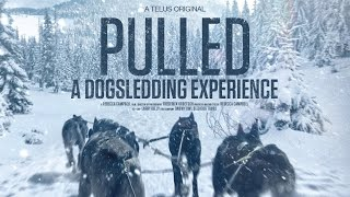 Pulled - A Dog Sledding Experience