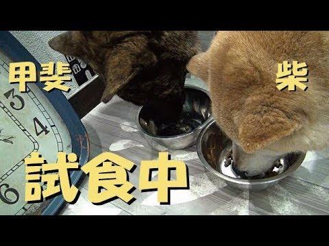 甲斐犬と柴犬に試供品を食べさせてみた=!【ニュートロ・シュプレモ】