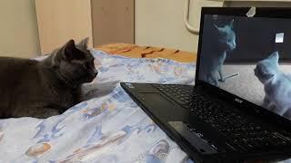 Кошка смотрит видео о себе и своем котенке