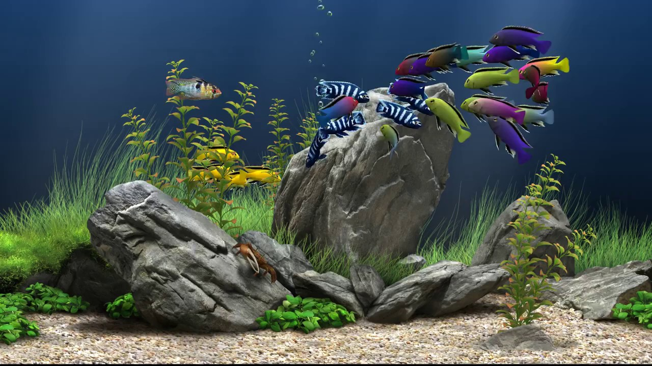 диване дреам аквариум тихая установка соседней
