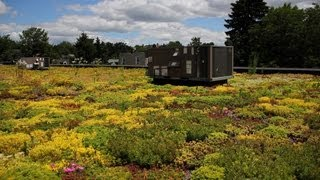 From The Field: Capturing Stormwater Naturally In Lancaster, Pennsylvania