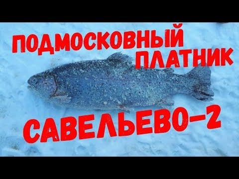 Подмосковный платник Савельево-2