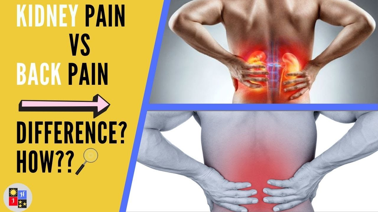 Low Back Pain Or Kidney Pain What Is The Difference Youtube