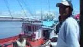 Belém, Ver-O-Peso, Mercado de peixe, Para, Amazonia, Brasil