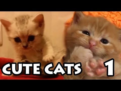 Best Cute Cat Videos #1  | Try Not to Aww Compilation 2020