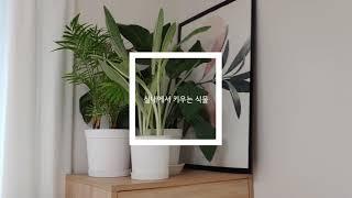 [홈가드닝] 햇빛 없이 잘 자라는 실내 식물들