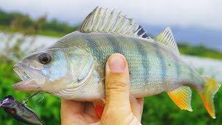 Рыбалка | Окунь ловля на поппер, уокер | Рыбалка на попперы!