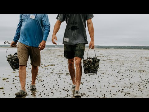 How to go clamming and easy steamed clam recipe with Island Creek