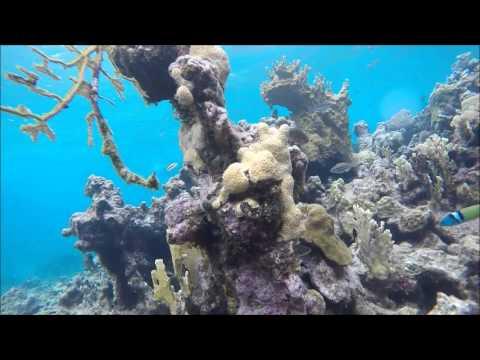 Antigua 4.16 Cades Reef HD
