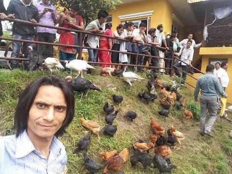 Kadaknatha ani rabbit  farm nagakot Bhaktapur