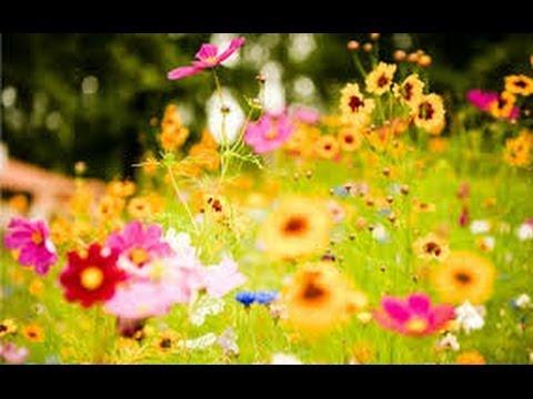 Dạy bé học - chủ đề : các loài hoa