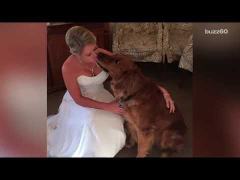 Therapy Dog Is Best Man At His Humans Wedding Youtube