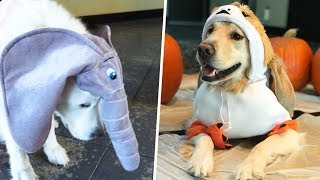 DOGS DRESS UP AS THEIR FAVORITE TOY FOR HALLOWEEN - Super Cooper Sunday #166