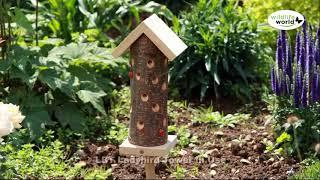 Wildlife World mariehøne hotel video