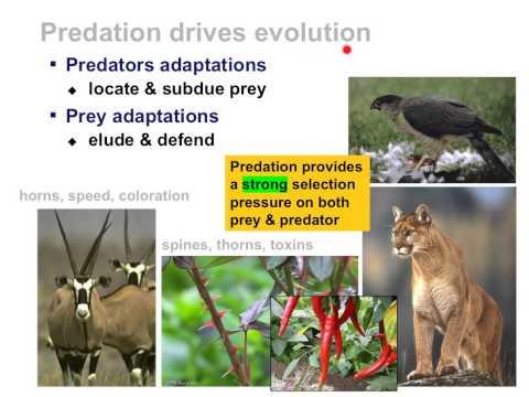 Species Interactions within Communities